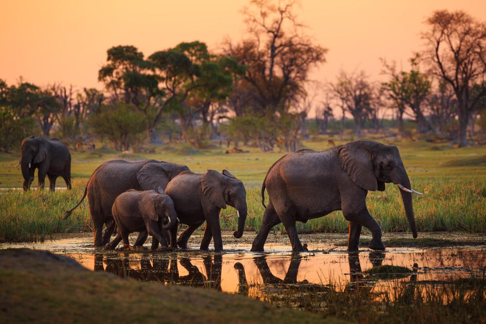 Afrique : les meilleures destinations à découvrir
