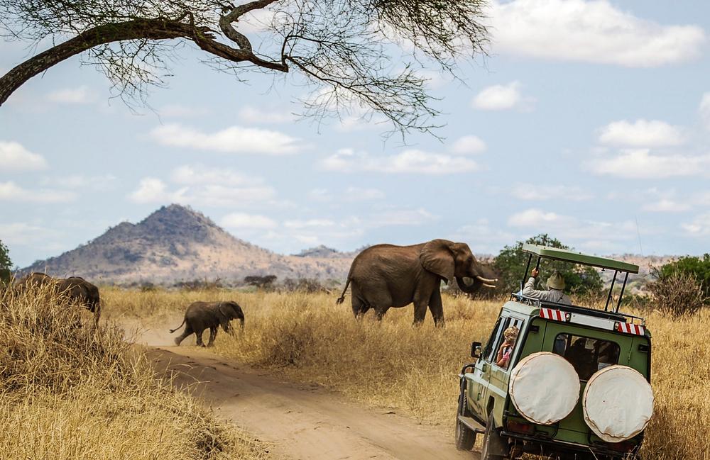 Faire un safari au meilleur prix Togo